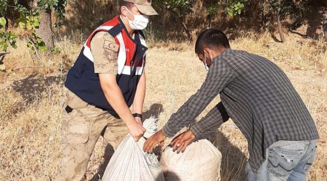 Fıstık bahçelerinde hırsızlık yapan 11 şüpheli yakalandı