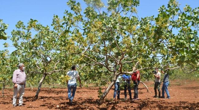 Siirt'te 371 bin TL bütçeli 2 tarımsal proje kabul edildi