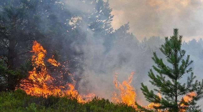 Mersin'deki orman yangını nedeniyle 50 ev tahliye edildi
